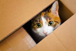 Pet Friendly San Diego Movers