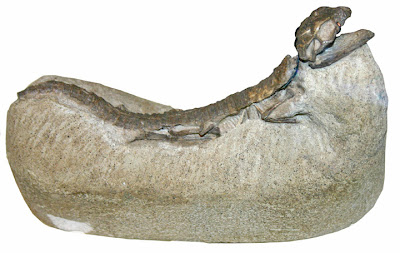 Hoplosuchus