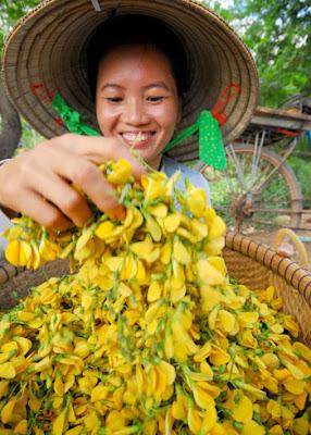 Chị Thái Thị Bé Sáu, ở xã Khánh An, huyện An Phú, An Giang, lũ về hái bông điên điển bán 50.000-60.000 đồng một ngày.