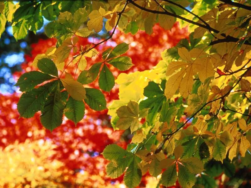 autumn season wallpapers hd - photo #39