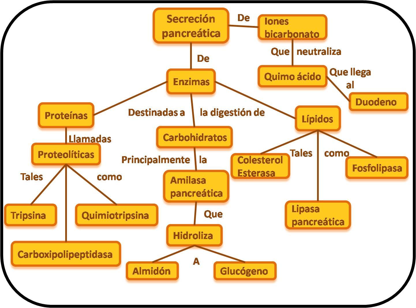 Evidencias de fisiología de Iris : Enzimas pancreaticas
