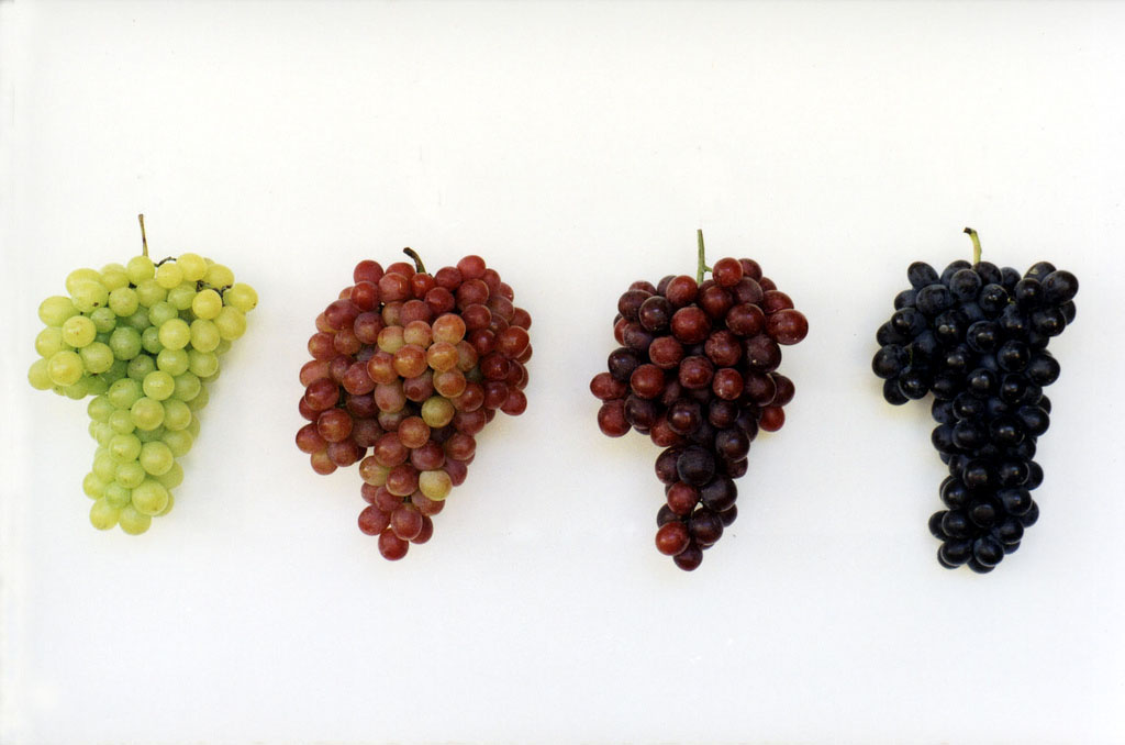 Phronesisaical Grape Varieties