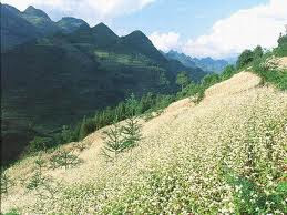 Sapa- a great place for trekking tours