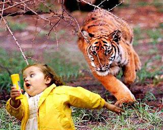 Acting tiger