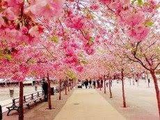 Flowers Garden Road