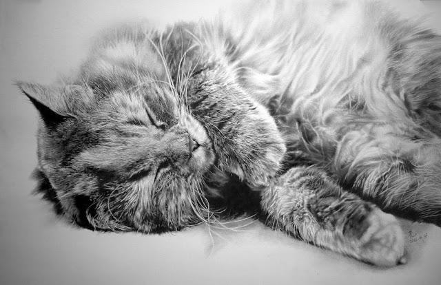 Рисунки котов и кошек карандашом