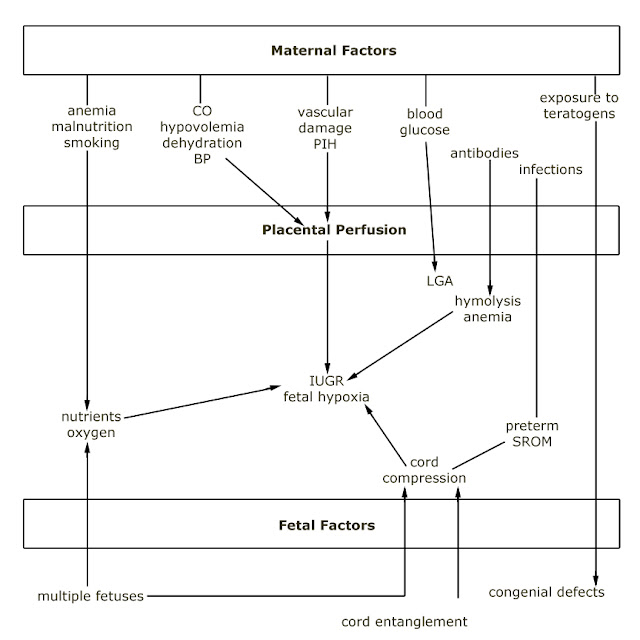 pathophysiology of postpartum hemorrhage Postpartum hemorrhage (pph) is when a woman has heavy bleeding after giving birth it's a serious but rare condition learn the signs of pph and what you can do to be safe.