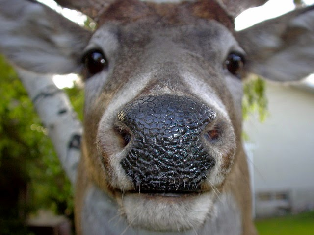 how to start a deer urine farm