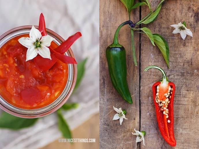 Piment d 39 espelette selbst anbauen pflanzen chili sauce for Chillies pflanzen