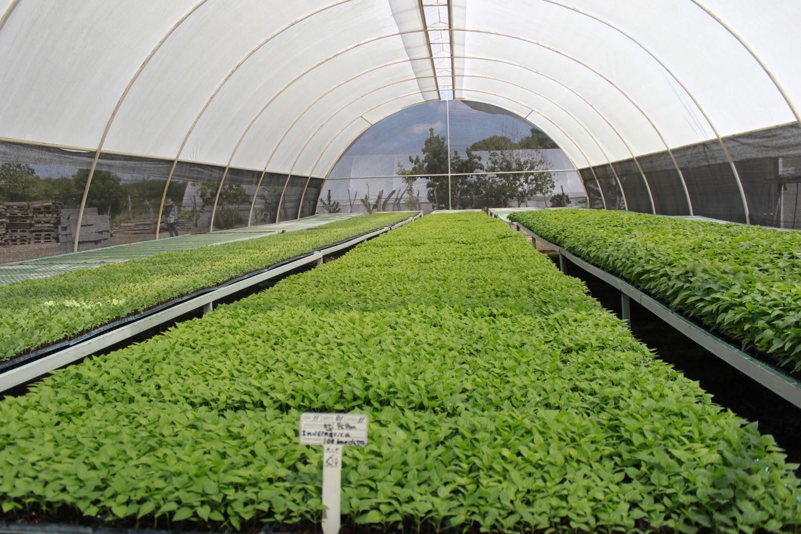 Alcesarloquesdelcesar en qu bor cosechan hortalizas y for Plantas para invernadero
