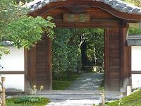 圓徳院の石蕗(つわぶき)は4,5日早くまだ蕾だった
