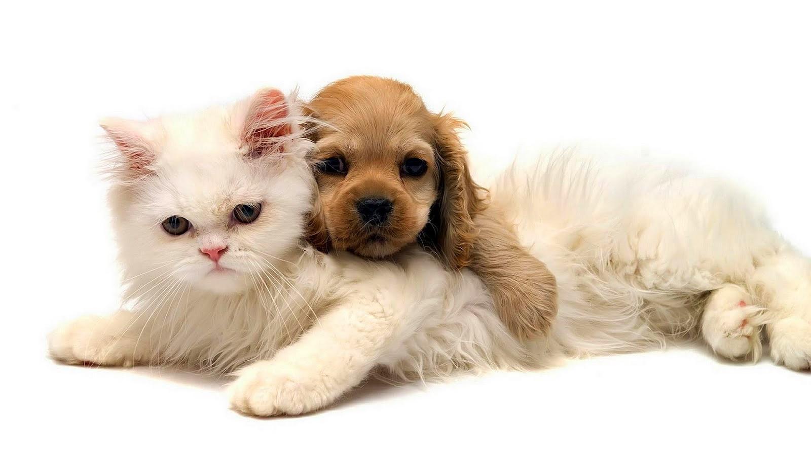 Hond en kat Mooie Leuke Achtergronden Voor Je Bureaublad (Pc, Laptop, Tablet)