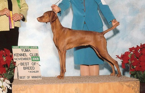 GCH Cameo's Wild Gypsy of Seville CGC JH, RWB VCA Nationals 2008