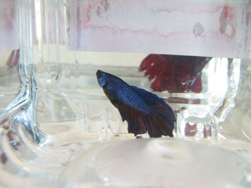 Betta Fish Care Page 14