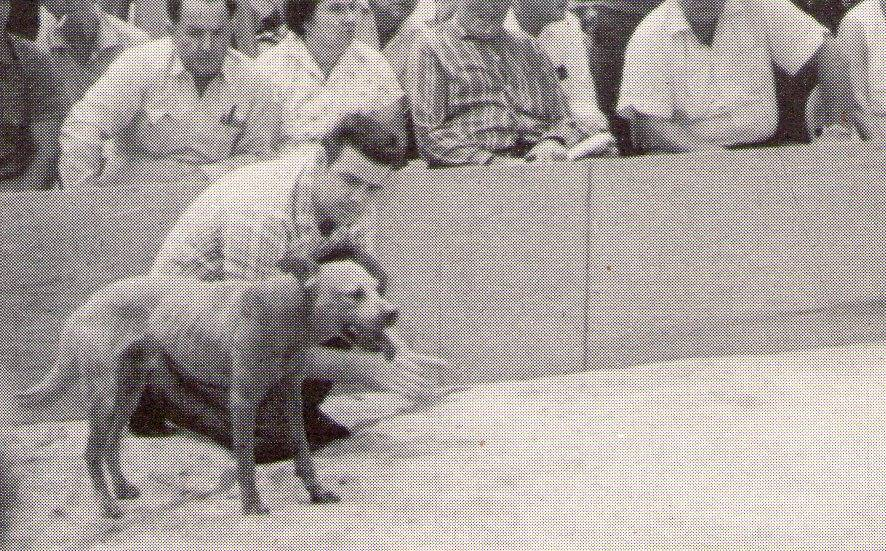 FLOYD BOUDREAUX INTERVIEW | SPORTING DOG NEWS