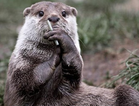 all funny cute cool and amazing animals funny otter images and