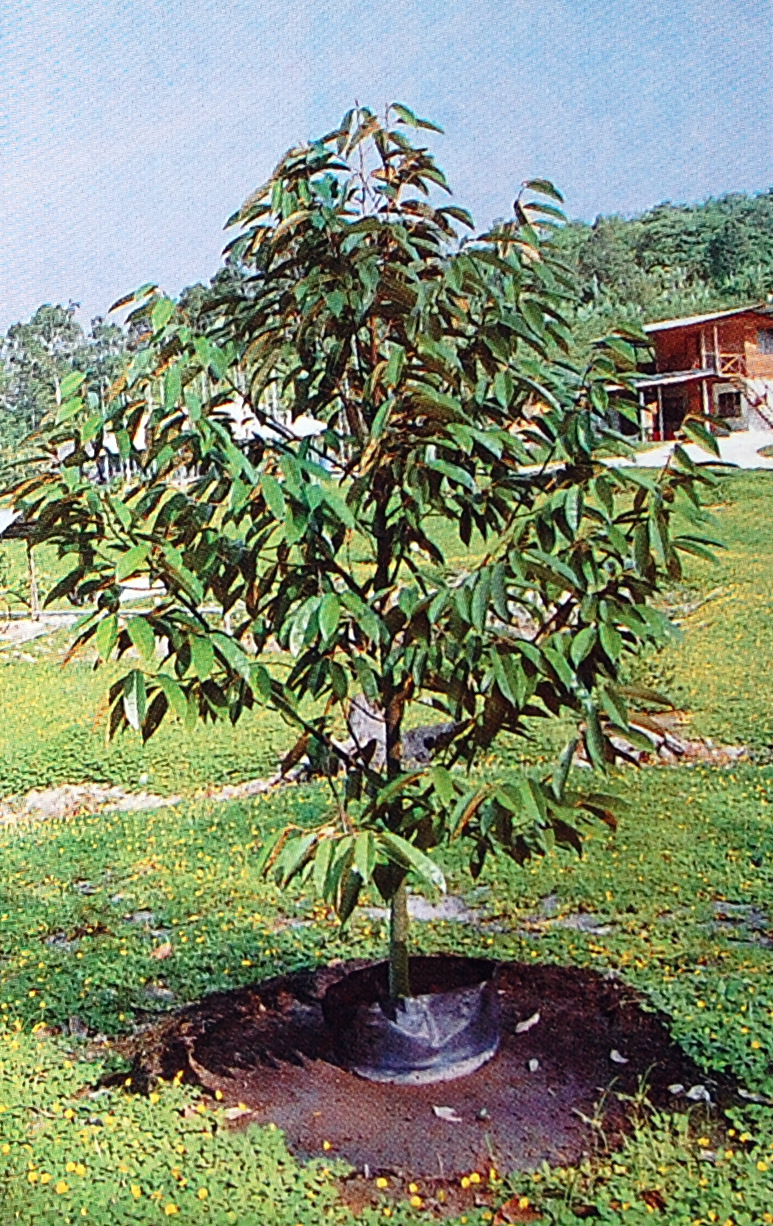 how to prune fruit trees pdf