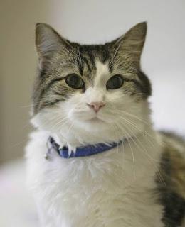 فى امريكا : قطه تتنبأ بوفاه الاشخاص قبل وفاتهم