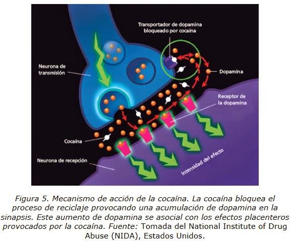 Ivermectin for human use