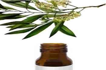 Aceite del árbol del té contraindicaciones