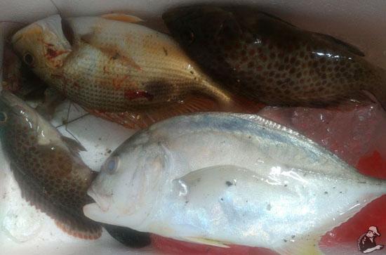 Hasil Tangkapan di Rockbund Fishing Chalet
