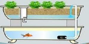 Aquaponics, ækwəˈpɒnɨks, pisciponics