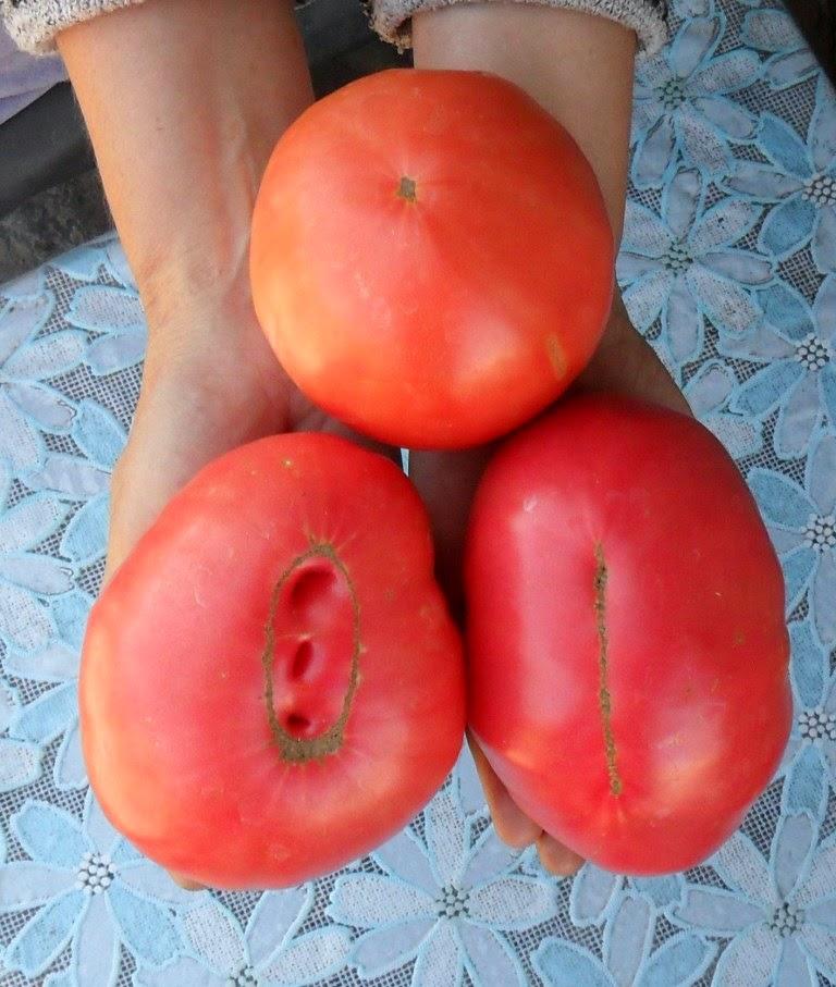 Мои любимые помидорки!