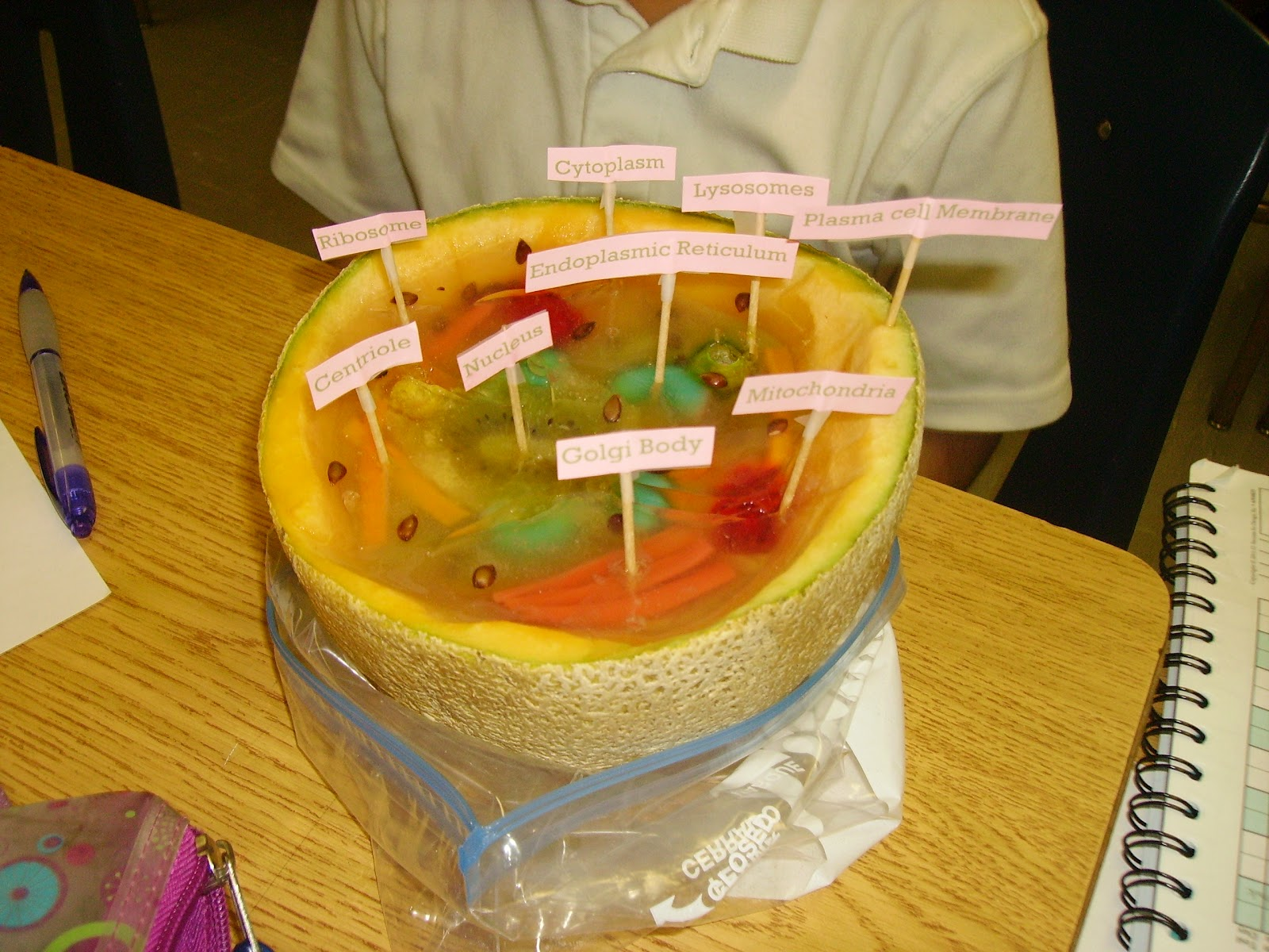 7Th Grade Science Cell Project http://mrsbargamiansblog.blogspot.com/2012_09_01_archive.html
