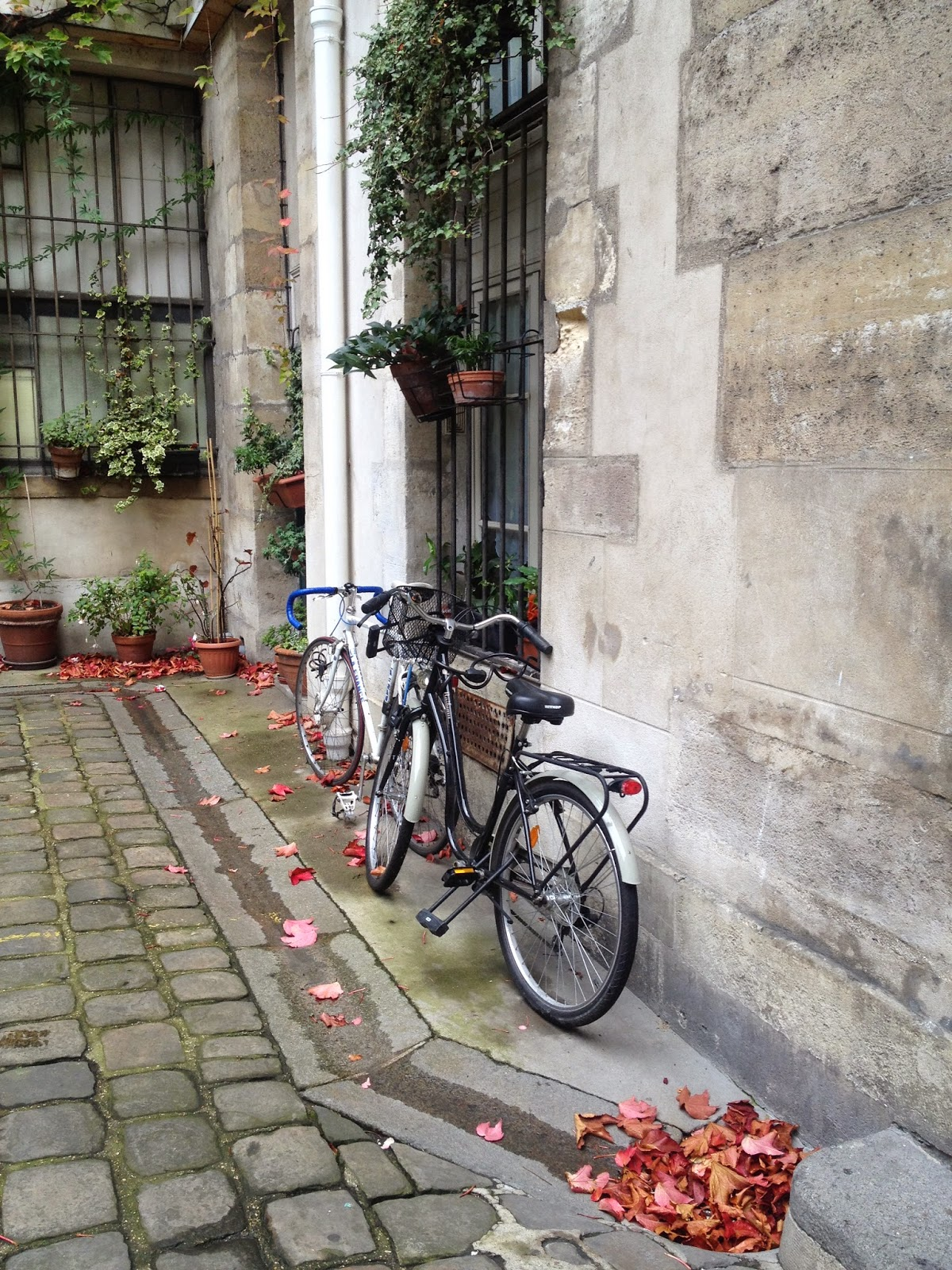 Bicycles and leaves in Le Marais