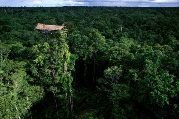 Top 10 Shaky Treehouses