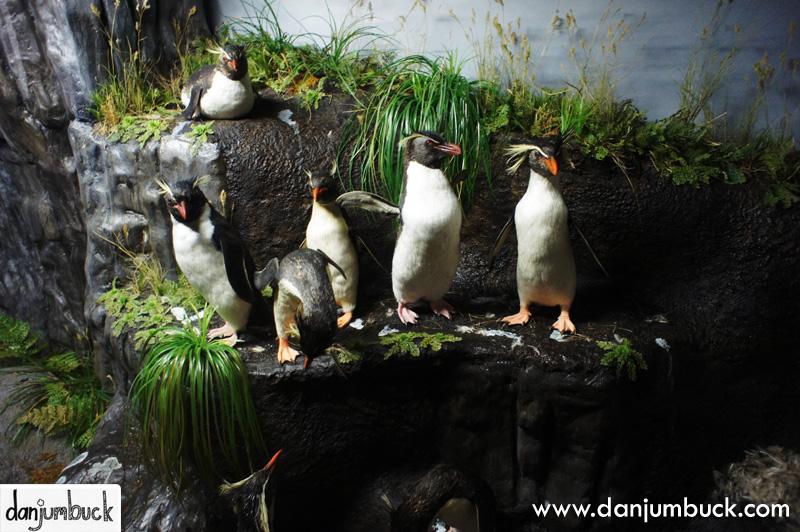 Emperor penguin habitat diorama