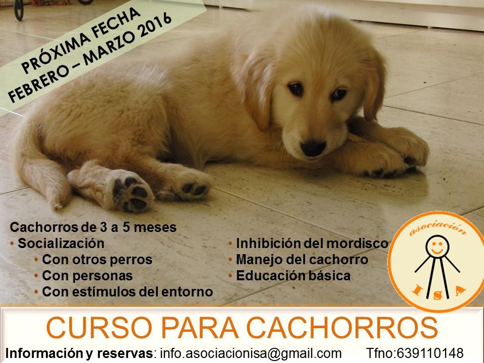CURSO CACHORROS