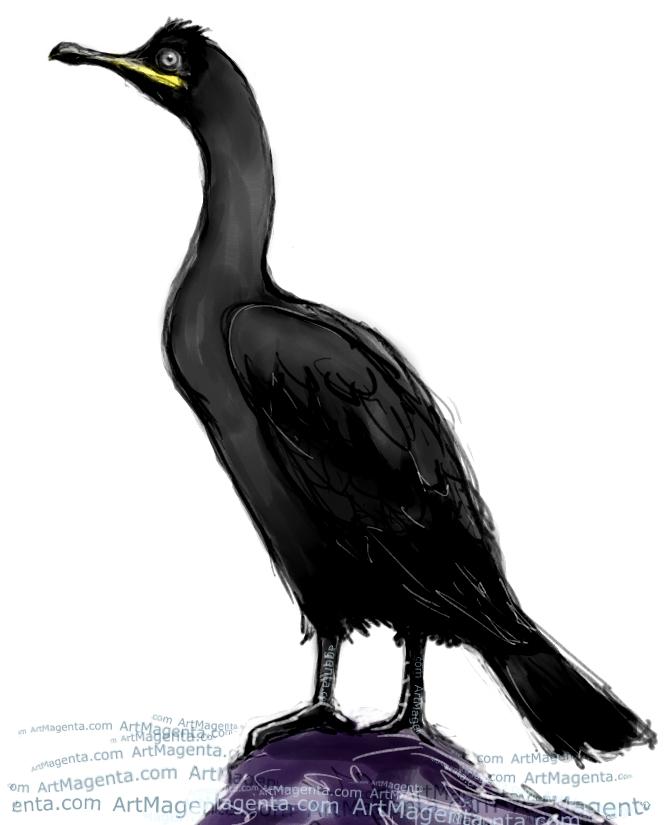 En fågelmålning av en toppskarv från Artmagentas svenska galleri om fåglar