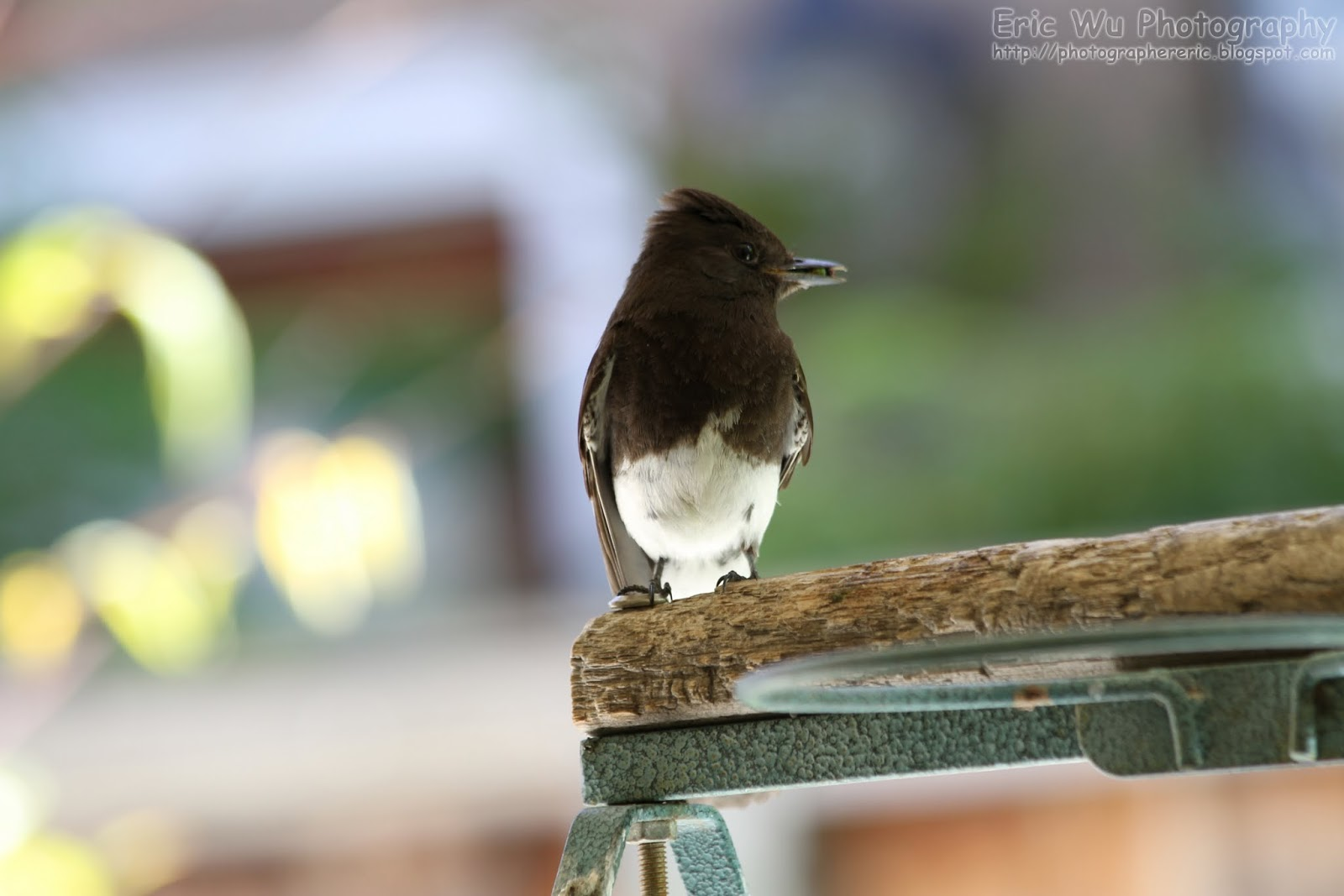 backyard and pleasanton trail birds naturetastic blog