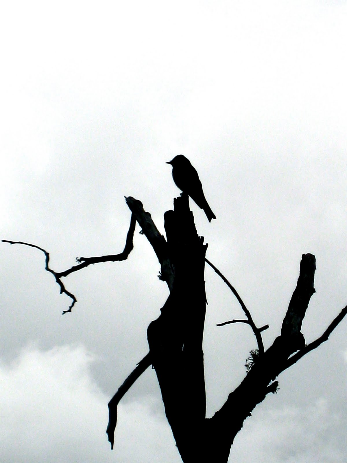 Sitting Love Bird Silhouette | www.imgkid.com - The Image ...