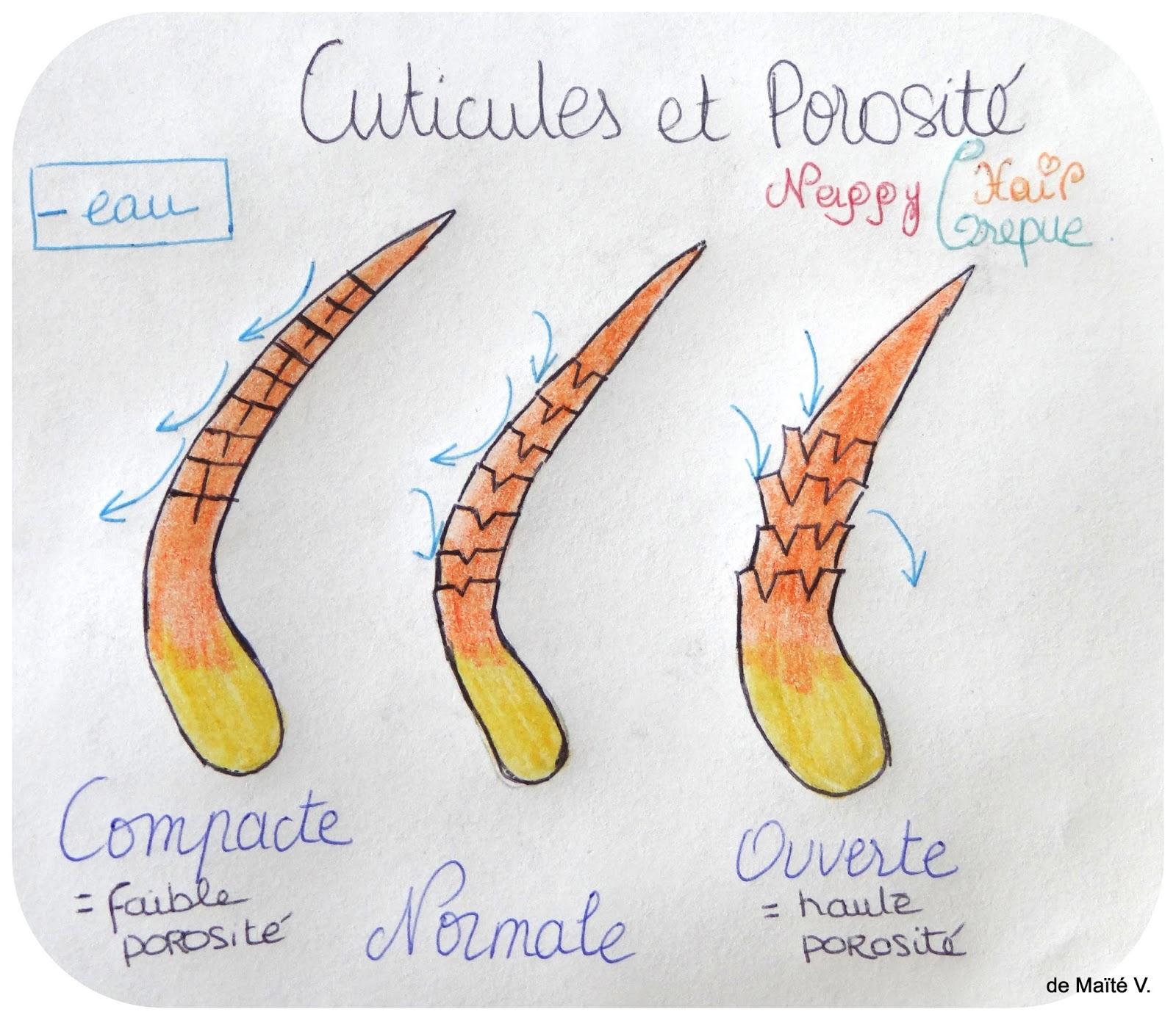Berühmt La porosité, le secret pour une bonne routine capillaire. | Nappy  BF38