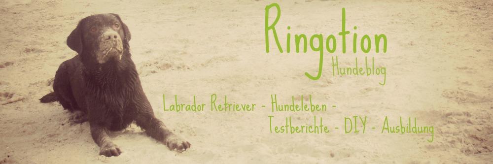 Ringotion - Hundeblog