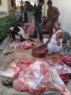 How To Do Qurbani http://bakra-eid.blogspot.com/2013/04/professional-butchers-in-alkhidmat.html