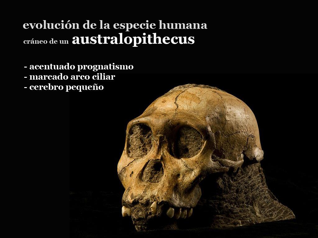 Ciencias Sociales, Geografía e Historia: La Evolución Humana