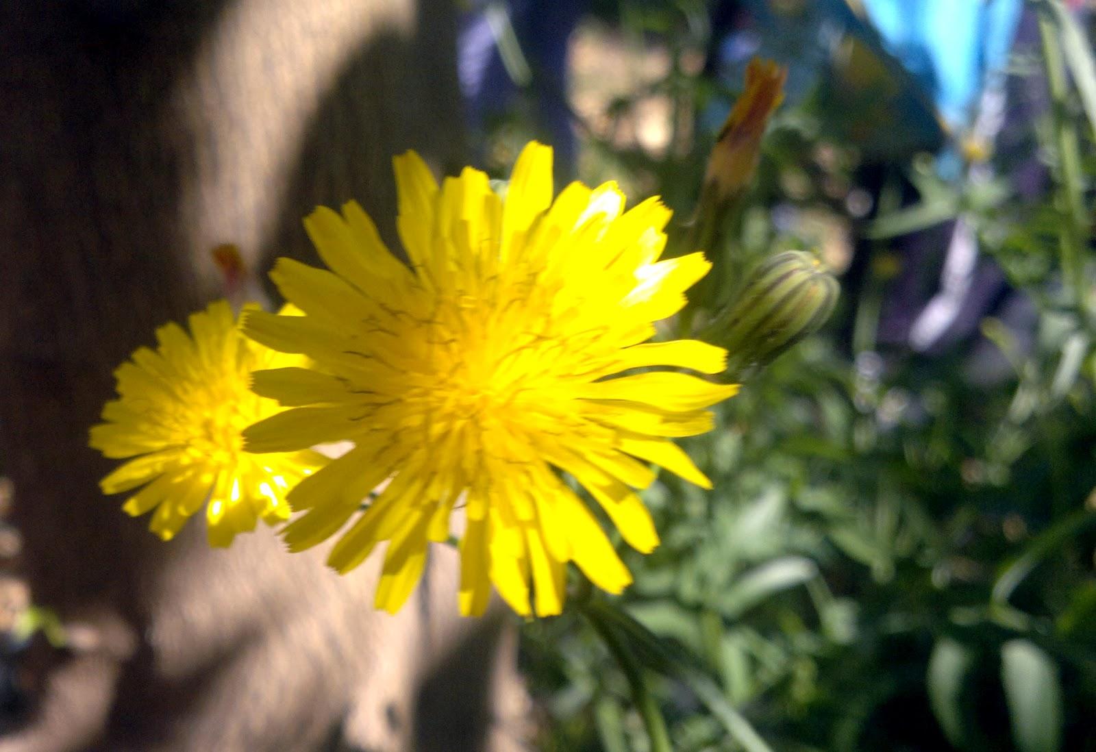 Crea tu jard n vetada la miel espa ola en europa por los for Crea tu jardin