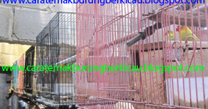 penjual piyek lovebird atau labet ternak burung