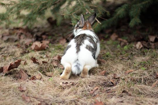 cute bunny feet