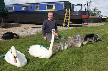 The Author with Cygnets at Swanley Marina
