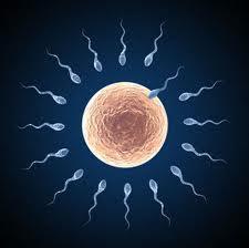 Tips menambah kuantiti bilangan sperma