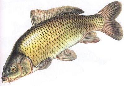 Bentuk Ikan