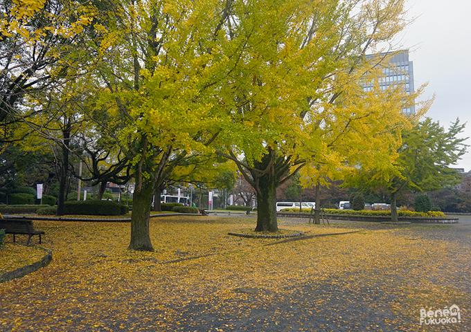 紅葉 - 中央区、福岡
