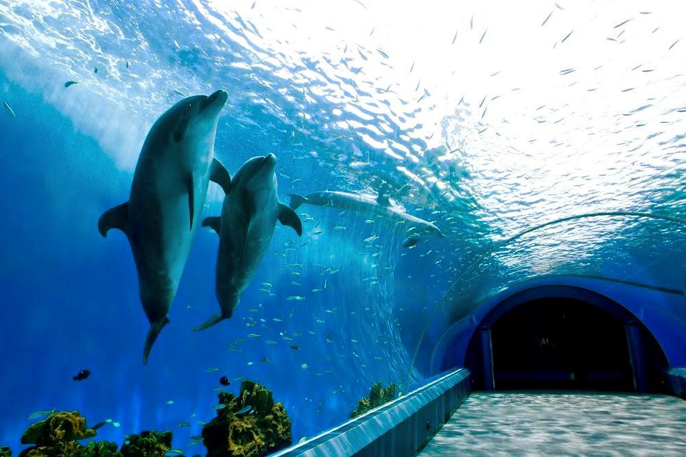 Yokohama Hakkeijima Sea Paradise, Japan – Travel Guide  Tourist Destinations
