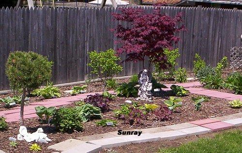sunray gardens hostas
