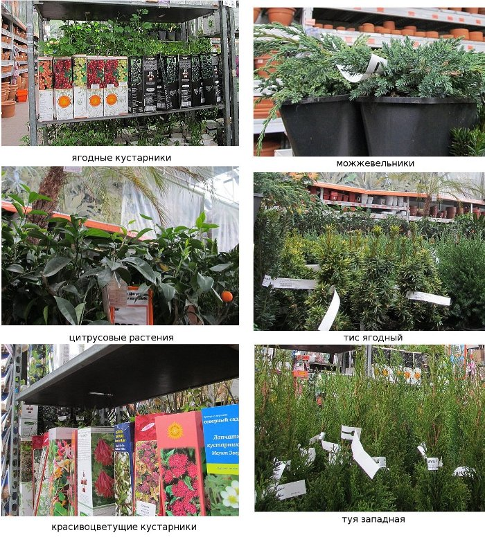 садовый каталог оби 2012: