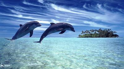 Delfines en la playa